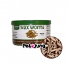 Exotic Nutrition - Canned Waxworms หนอนแว็กซ์เวิร์ม กระป๋อง (35g.)