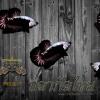 กิจกรรมแจกปลาฟรี มูลค้ามากกว่า 10,000 บาท BLACK SAMURAI
