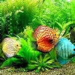 ชื่อปลาสวยงามทีมีการส่งออกของประเทศไทย