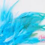 ขนนก สีฟ้าอ่อน 20 ชิ้น