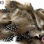 ขนนก(ก้าน) สีน้ำตาลธรรมชาติ (20 ชิ้น)