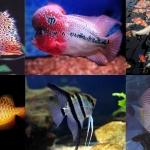 10 ชนิดปลาสวยงามที่นิยมเลี้ยงไว้ประดับบ้าน