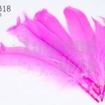 ขนนก สีชมพู 5 ชิ้น