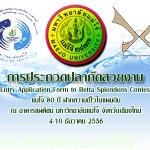 การประกวดปลากัดสวยงาม แม่โจ้ เชียงใหม่ วันที่ 4 - 10 / 2556