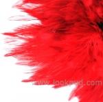 เรื่องสั้นน่าอ่าน : ขนนกสีแดง แผลงฤทธิ์