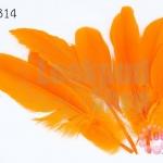 ขนนก สีส้ม 5 ชิ้น