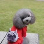 เสื้อhoodหมาหน้าบึ้งไซด์ S M L XL XXL
