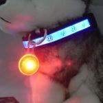 ไฟกระพริบ LED Clip on จี้ห้อยคอ สีแดง ห้อยพวงกุญแจ ป้ายห้อยคอสุนัขและแมว