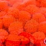 ปอมปอมไหมพรม สีส้ม 1ซม (100ชิ้น)