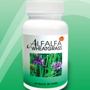 ผักเม็ด สารคลอโรฟิลล์เข้มข้นสกัด Wheatgrass & Alfalfa ( วีทกราสและอัลฟัลฟ่า ) 60 แคปซูล
