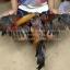 เจ้าสินเจริญทรัพย์ 168 พม่าแข้งโหด thumbnail 3