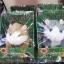 ตุ๊กตาหนูแฮมสเตอร์โต้ตอบเสียงพูด Mimicry Pet (ซ้อ 3 ชิ้นราคาส่ง 500 บาท ต่อชิ้น) thumbnail 2
