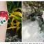 พร้อมส่ง ชุดว่ายน้ำบิกินี่ทูพีซ ลายดอกไม้หลากสีสวยๆ บิกินี่แต่งระบายพร้อมโบว์ผูกเส้นเล็ก thumbnail 7