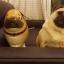 Pug Dog Walking Balloons - น้องหมาปั๊กบอลลูน / Item No. TL-K021 thumbnail 4