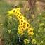 Giraffe Walking Balloons - ยีราฟบอลลูน / Item No. TL-K019 thumbnail 1