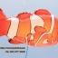 ลายปลาการ์ตูน นีโม่พ่อลูก - Two Clown Fish Shape Balloon/ Item No.TL-B006 thumbnail 3