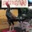 เจ้าสินเจริญทรัพย์ 134 พม่าหัวล่างพิเศษ thumbnail 1
