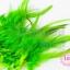 ขนนก สีเขียวอ่อน 20 ชิ้น thumbnail 1