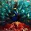 Opeth - Sorceress 1Lp N. thumbnail 1