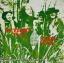 Jethro Tull - This Was 1969 1lp thumbnail 2
