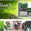 เอมมูร่า เซซามิน Aimmura Sesamin งาดํา&ธัญพืช สารเซซามิน จาก'งาดำ' ที่รักษามะเร็ง โรคสมอง และโรคข้อเสื่อมกระดูกพรุน thumbnail 6