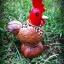 โคมไฟกะลามะพร้าวรูปไก่หัวแดง thumbnail 1