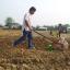 เครื่องหยอดเมล็ดพันธุ์พืช (Grain Seeder) thumbnail 9