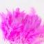 ขนนก สีชมพู 20 ชิ้น thumbnail 1