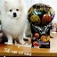 บอลลูนเป่าลม ลาย Halloween / Item No. TL-M021/ Promotion Buy 1 get 1 (สินค้ามีจำนวนจำกัดนะคะ) thumbnail 7