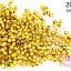 ลูกปัดพลาสติกเคลือบสีทอง กลมเจียรเหลี่ยม 3มิล (1ขีด/100กรัม) thumbnail 1