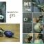 ชุดของแต่งบ้าน ปอม ปอม น้ำหอม DIY Set thumbnail 6