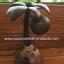 Coconut Shell Lamp (โคมไฟต้นมะพร้าว โคม 1 ลูก) thumbnail 5