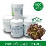 เมล็ดพันธุ์เรดคอรัล / Red Coral ชนิดเคลือบ อัตราการงอก 99%