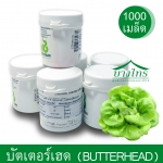 เมล็ดพันธุ์บัตเตอร์เฮด / Butterhead ชนิดเคลือบ อัตราการงอก 99%