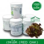 เมล็ดพันธุ์เรดโอ๊ค / Red Oak ชนิดเคลือบ อัตราการงอก 99%