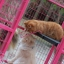 กรงแมว 6 หุน ( สีชมพู ) thumbnail 4