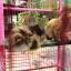 กรงแมว 6 หุน ( สีชมพู ) thumbnail 3