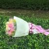 Pink Roses (M)