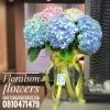 Premium pink blue Hydrangea (XL)