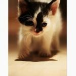 เคสลาย Cute cat