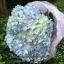 ช่อดอกไม้ไฮเดรนเยีย สีฟ้า โอกาสวันเกิด (M) thumbnail 3