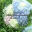 ช่อดอกไม้ ไฮเดรนเยีย ฟ้า-ขาว-ชมพู (M) thumbnail 3