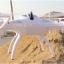 โดรนติดกล้อง TY923 Drone Big size สามารถใช้ร่วมกับกล้อง actioncam(gopro sjcam) ได้ เหมือน cheerson CX20 thumbnail 7